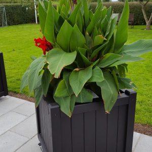 Baldur plantekasse med kæmpe blomst i